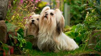 OUTDOOR DOG PHOTOGRAPHY UK