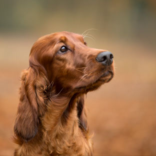 Dog Photographer Rebecca Goutorbe Derbyshire   Ashbourne   Staffordshire